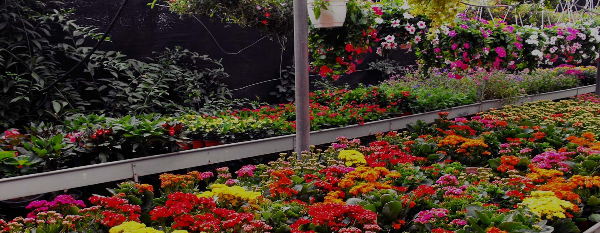 Viveros ponderosa producci n y comercializaci n de for Produccion de plantas ornamentales